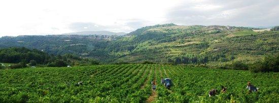 Antugnac, France: Vendange & paysage - Domaine Delmas