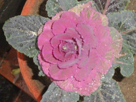 Hotel Bhagsu - HPTDC: flower