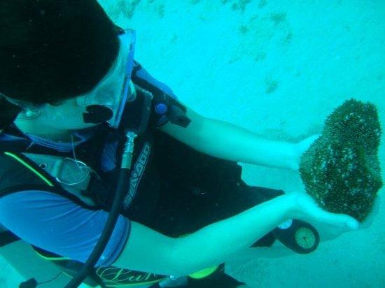 Marine Life Divers: Sea cucumber