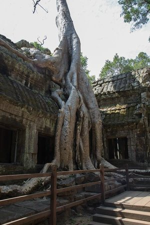 Ta Prohm: Tomb Raider shot