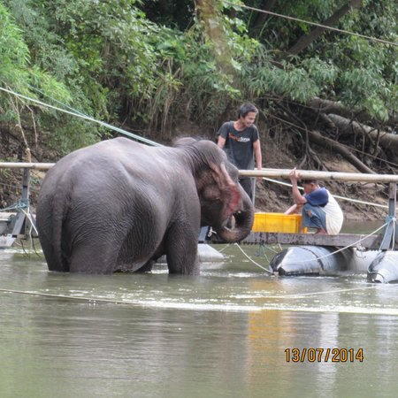 River Kwai Jungle Rafts Resort: One Day, the elephant, waiting for breakfast