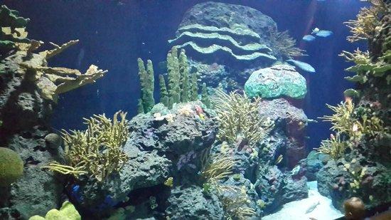 Rotterdam Zoo: Coralls
