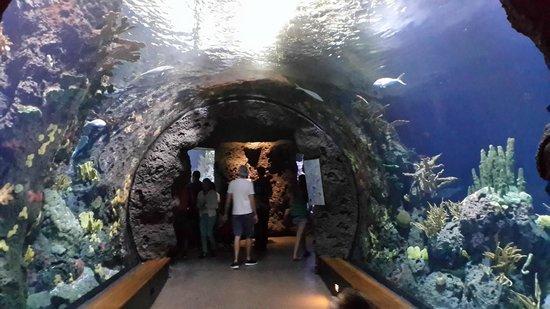 Rotterdam Zoo: Below the water wiev