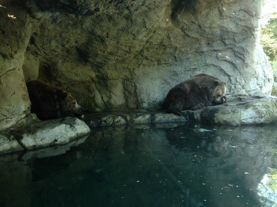 Woodland Park Zoo: Grizzly Bears napping