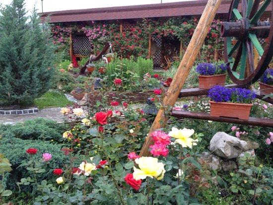 Hotel Crocus : Garden