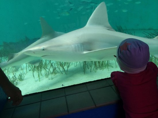 Mote Marine Laboratory and Aquarium: Sharks