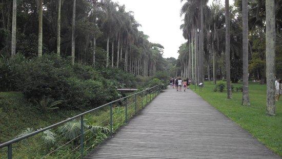 Jardim Botanico de Sao Paulo: The view, just as you enter the gardens