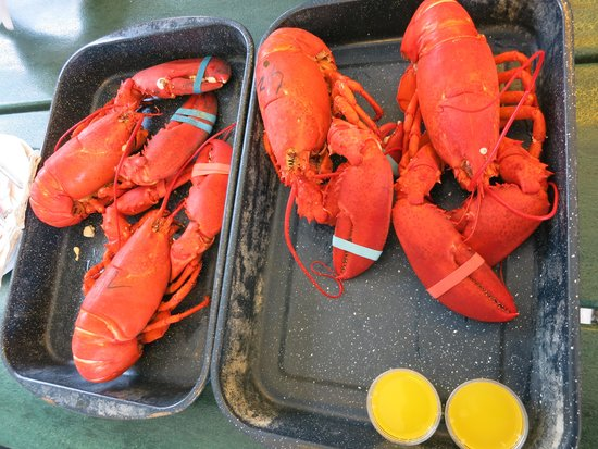 Trenton Bridge Lobster Pound: Freshly steamed lobster, butter costs extra