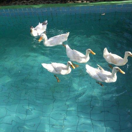 Antalya Farm House : ördeklerimiz