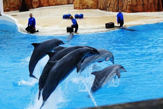 Parc Astérix : The Dolphin Show