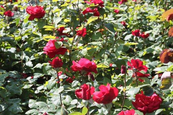 Westbroekpark: flower