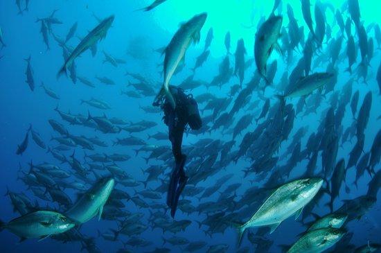 Porto Santo Sub - Centro de Mergulho
