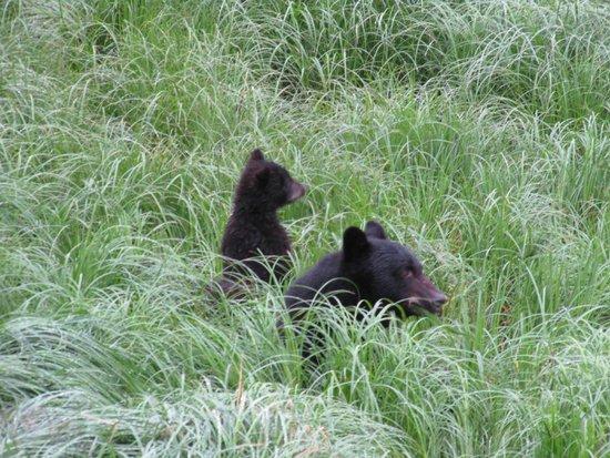 Ketchikan Taxi Cab Tours: Hi bear!