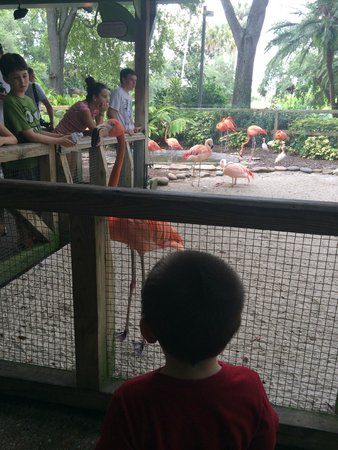 Busch Gardens : Flamingo greeting - animal nursery area