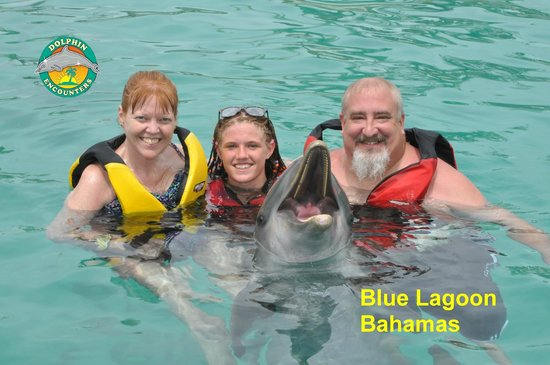 Hotel Riu Palace Paradise Island: Dolphin Encounter