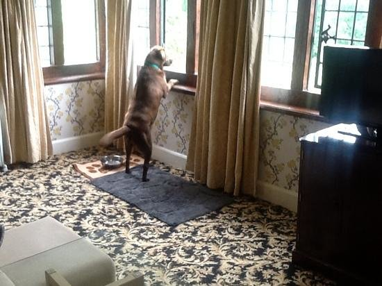 Caer Beris Manor Hotel: come on folks, it walkie time