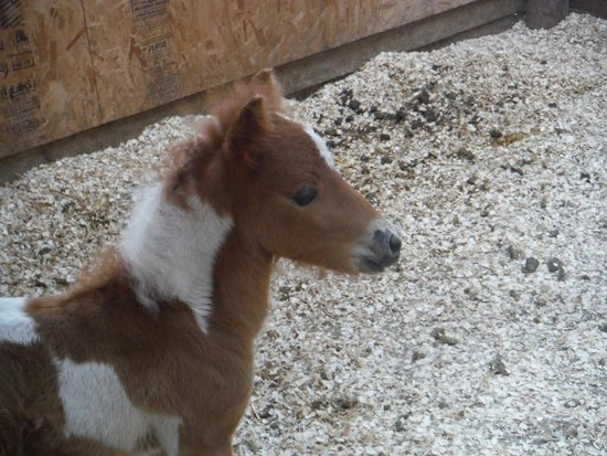 Running Waters Country Estate: Lucky to meet the new baby!