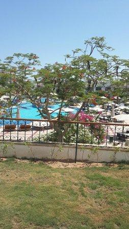 Hilton Sharm Dreams Resort: pool view