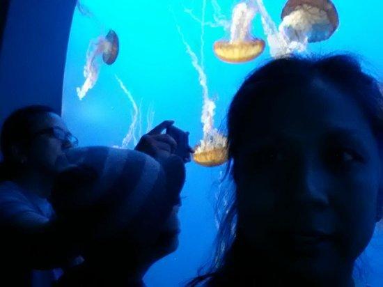 Monterey Bay Aquarium : Aaaaawwwwhhhhdddd....
