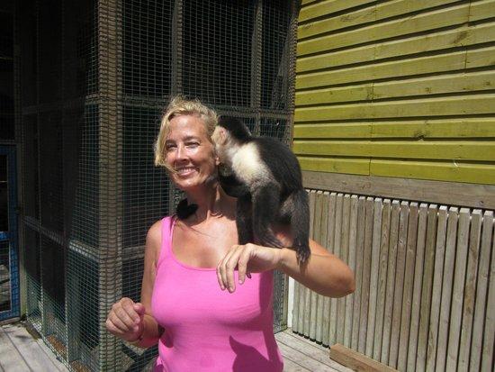 Infinity Bay Spa and Beach Resort: Zip Line Monkey :)