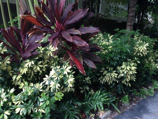 Cheeca Lodge & Spa: Grounds