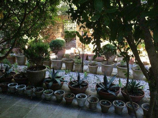 Il Convento di Santa Maria di Costantinopoli : Pots of pots
