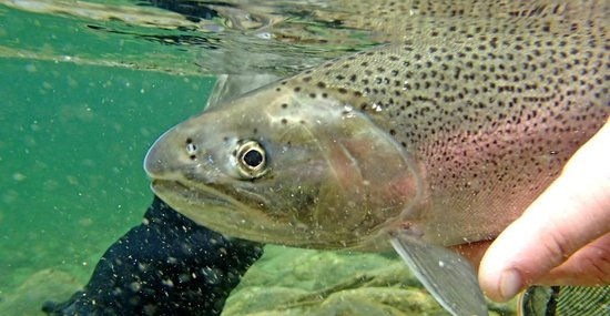 Pemberton Fish Finder: fly fishing