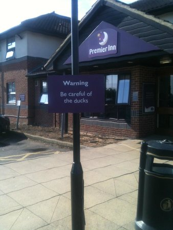 Premier Inn Clacton-on-Sea (North / Colchester Road) Hotel: Be careful of the ducks