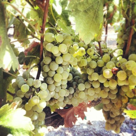Pomar Junction Vineyard & Winery: Viognier