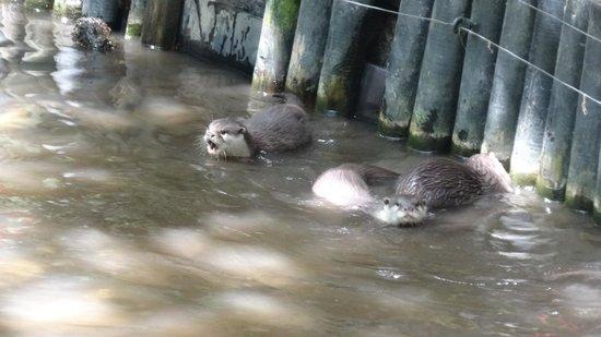 Newquay Zoo: Cumberbatch?