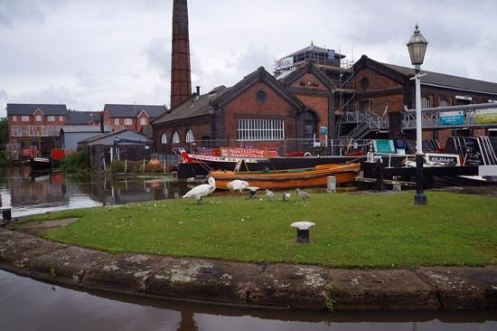 National Waterways Museum: swans on the island