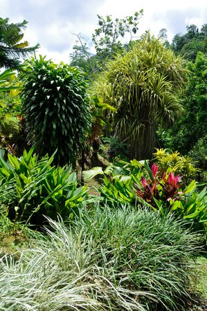 Osa Rainforest Rentals: Beautiful gardens