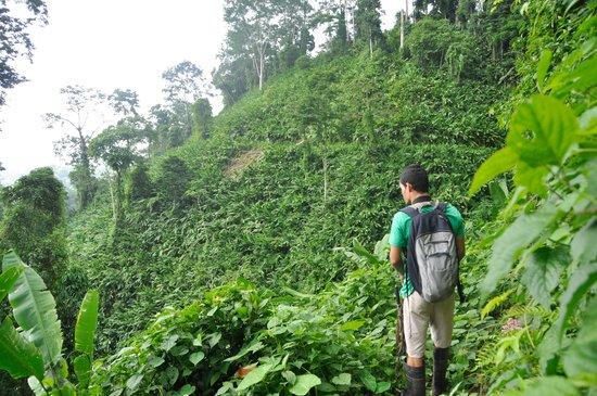 Osa Rainforest Rentals: Our guide Rolondo on Bolita trail