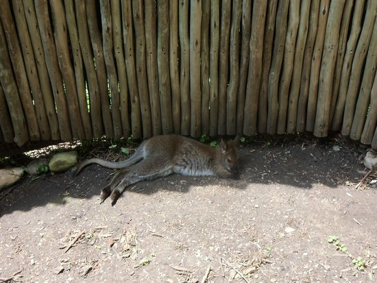 Blank Park Zoo: No separation between us and the joeys