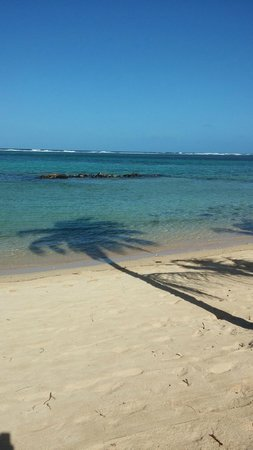 Tamassa : The Beach - beautiful, shallow and fish everywhere - just watch out for the sea urchins.