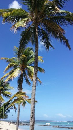 Tamassa Resort: Palms on the beach