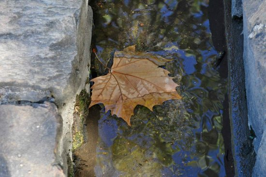 Waterford Estate : Floating Leaf