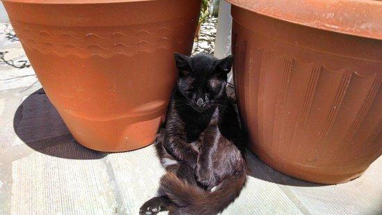 Marina View: Relaxing cat