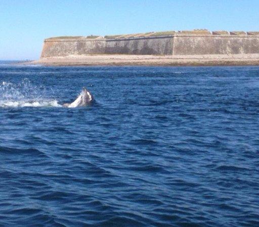 Dolphin Trips Avoch: July 11th 2014