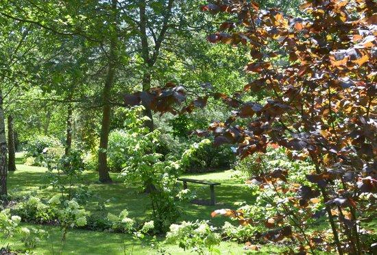 Bluebell Arboretum and Nursery: A Taste of Summer