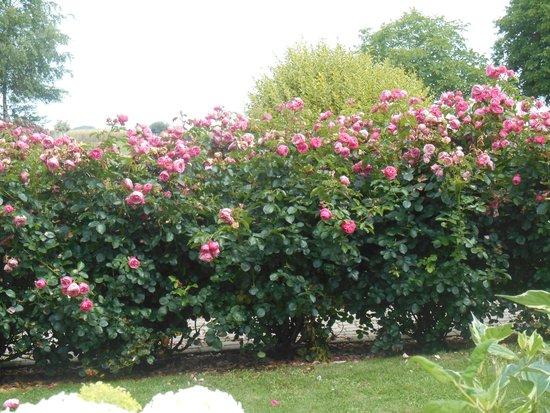 Ferme de la Ranconniere: Some floweres