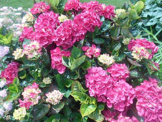 Domaine de la Ranconniere et de Mathan : More flowers
