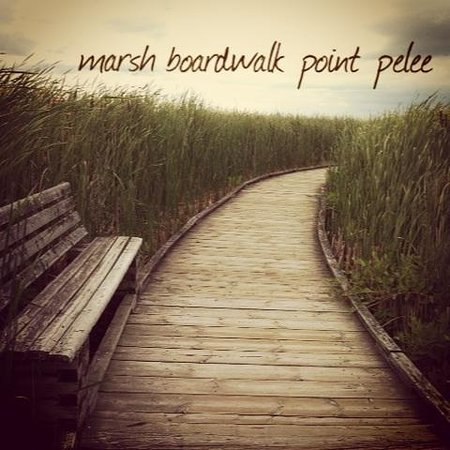 Point Pelee National Park : Marsh boardwalk