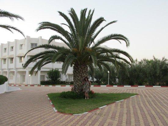 El Mouradi Port El Kantaoui : 20
