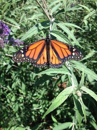 Norfolk Botanical Garden : butterfly garden
