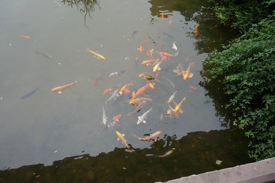Guilinyi Royal Palace: feed fish from balcony