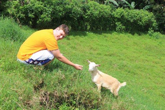 Tres Cabras Restaurante at Nepenthe : un nino y una cabra