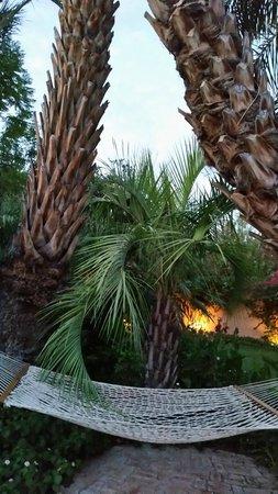 Royal Palms Resort and Spa: Hammock