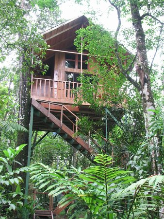Tree Houses Hotel Costa Rica: Our treehouse-Toucan