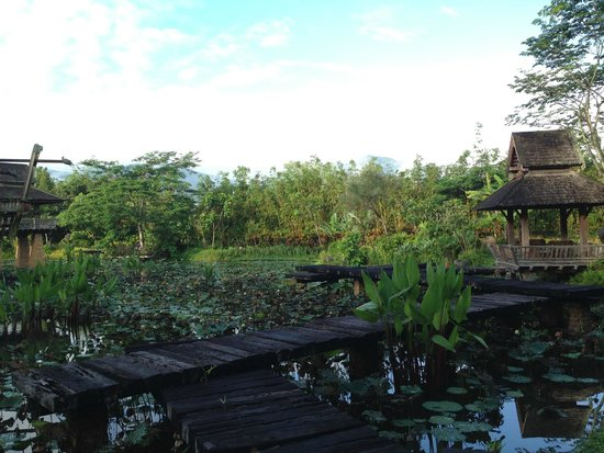 Howie's HomeStay : The extensive gardens